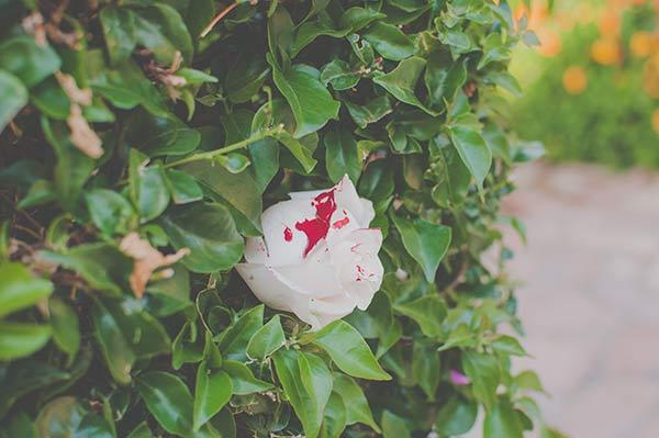 decoracion-creativa-boda-malaga